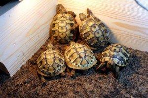The Tortoise Starter Kit ADVANCED Review