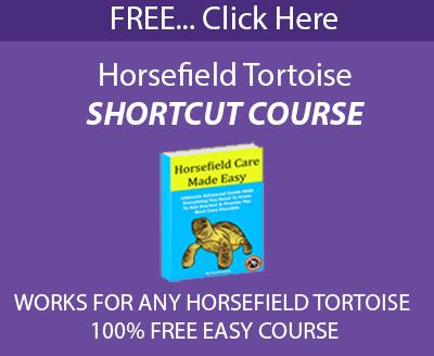 Horsefield разбира пряк път