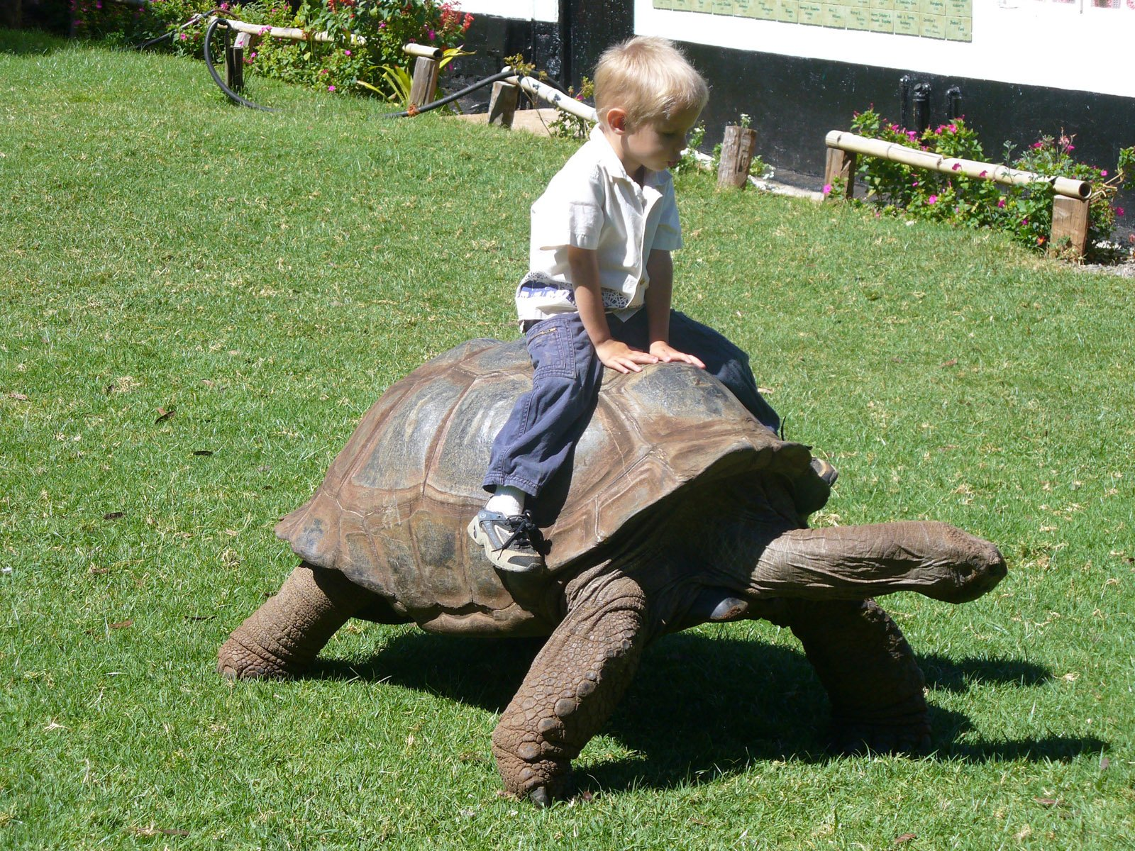 How do I Take Care of my New Pet Tortoise?