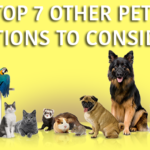 Top 7 Other Pet Options to Consider