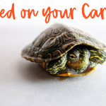 What to Do When Your Tortoise Has Pooped on Your Carpet